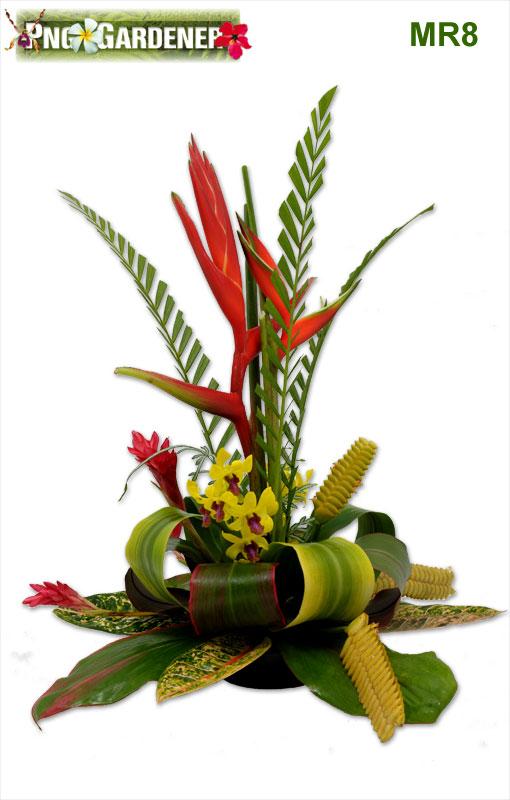 Png Gardener Port Moresby Papua New Guinea